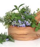 Các loại thảo mộc nên trồng trong nhà