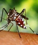 Bài thuốc hỗ trợ điều trị sốt xuất huyết