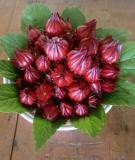 Tác dụng chữa bệnh của hoa bụp giấm