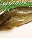 Bài thuốc chữa bệnh từ cá trê