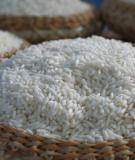 Tác dụng của gạo nếp trong chữa bệnh
