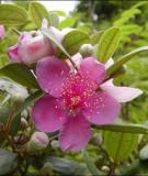 Bài thuốc chữa bệnh tiêu chảy bằng hoa