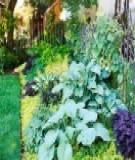 Không gian thoáng cho ngoại thất nhà vườn
