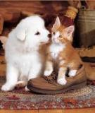 Chó với mèo