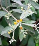 Bài thuốc chữa bệnh từ cây đại bi