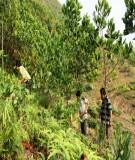 Điều tra hiện trạng giao rừng, cho thuê rừng và canh tác nương rẫy