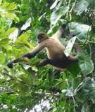 Phần thực hành sinh thái rừng