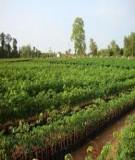 Quy trình làm vườn ươm cây con