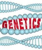 Các kiểu quan hệ giữa các gene allele đối với một tính trạng