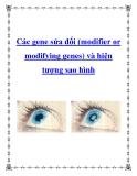 Các gene sửa đổi (modifier or modifying genes) và hiện tượng sao hình