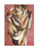 Món ăn thuốc từ cá bống