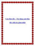 Cam thảo dây – Tác dụng cam thảo dây chữa ho giảm nhiệt