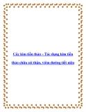 Cây kim tiền thảo – Tác dụng kim tiền thảo chữa sỏi thận, viêm đường tiết niệu