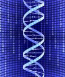 Bệnh di truyền ở người do đột biến gen