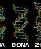 Các đặc tính của kiểu di truyền đa yếu tố