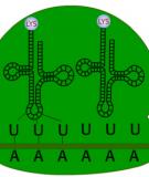 Thực hành: Các kỹ thuật phân tích protein