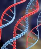 Các thành phần phân tử của phiên mã