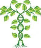 Bài giảng Dấu vân tay DNA