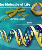 Bài giảng Điều hòa biểu hiện gene ở eukaryote
