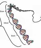 Điều hòa hoạt động gen ở sinh vật nhân thực