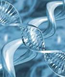 Giải mã sự sống – quá trình phát hiện các mã di truyền
