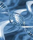 Protein hay ADN là vật chất di truyền của phagơ T2 ?