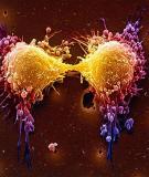 Sự cuộn xoắn của ADN trong tế bào