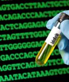 Sự di truyền của gene đột biến nằm trên nhiễm sắc thể thường
