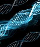 Vai trò của các loại ARN trong dịch mã