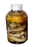 Tác dụng chữa bệnh của rắn rất tốt cho sức khỏe