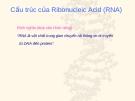 Cấu trúc của Ribonucleic Acid (RNA)