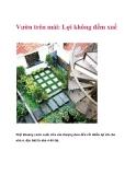 Vườn trên mái: Lợi không đếm xuể