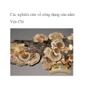 Các nghiên cứu về công dụng của nấm Vân Chi