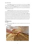Quy trình nấu bia - Dòng bia Pilsner