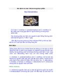 Xác định các loài Vibrio trong thực phẩm Key Characteristics