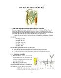 Chủ đề Kỹ thuật trồng ngô