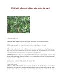 Hướng dẫn kỹ thuật trồng và chăm sóc bưởi da xanh