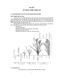 Chủ đề Kỹ thuật thâm canh lúa