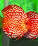 Bệnh kí sinh trùng ở cá - Ths. Trần Công Bình