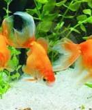 Bệnh ký sinh trùng trên cá nuôi - Một số chất có thể thay thế Malachite green