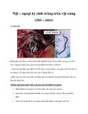 Nội – ngoại ký sinh trùng trên vật cưng (chó – mèo)