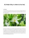 Kỹ thuật trồng và chăm sóc hoa huệ