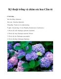 Kỹ thuật trồng và chăm sóc hoa Cẩm tú