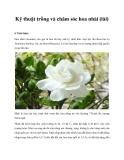 Kỹ thuật trồng và chăm sóc hoa nhài (lài)