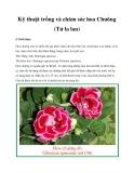Kỹ thuật trồng và chăm sóc hoa Chuông (Tử la lan)