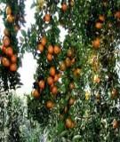 Giáo trình Cây ăn quả