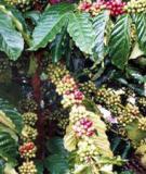 Chuyên đề nhân giống vô tính cây trồng - ĐH Nông Nghiệp Hà Nội