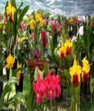 Những sai lầm thường gặp trong chăm sóc Hoa lan - Cách gieo hạt giống cây hoa