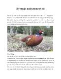 Kỹ thuật nuôi chim trĩ đỏ