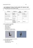 Qui trình kỹ thuật nuôi chim yến trong nhà